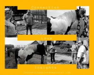 Groepsuitje Noord Holland paardencaching